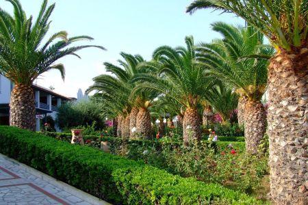 Kreta Anissaras zieleń