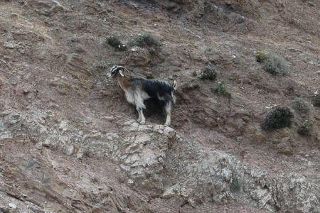 Kozy Kreta