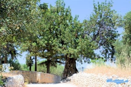Okolice kościoła Panagia Kera Kreta