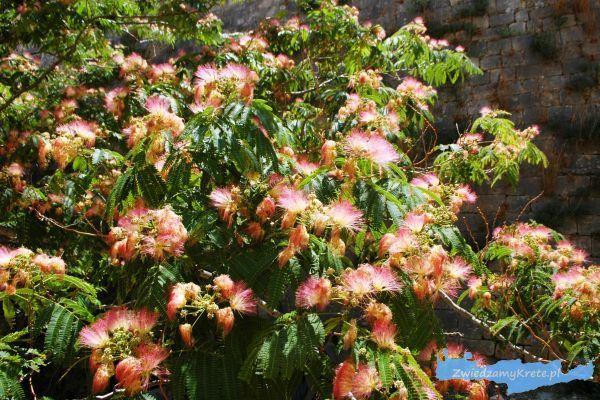 Rośliny na Krecie